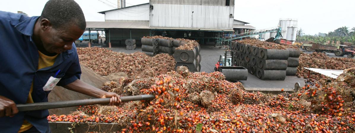 Produzione di olio di palma in Costa d'Avorio