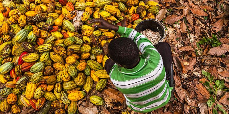 Un coltivatore di cacao in Congo